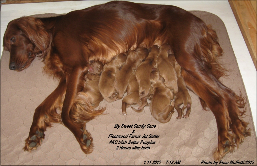 2 hours old ~ January 11, 2012